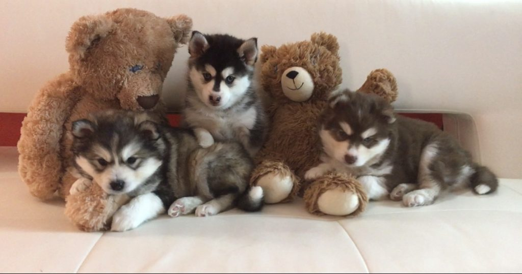 Puppies 2020